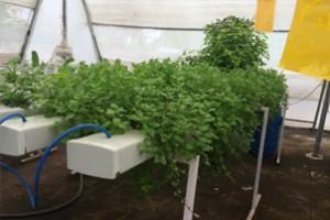 hydroponics-farming